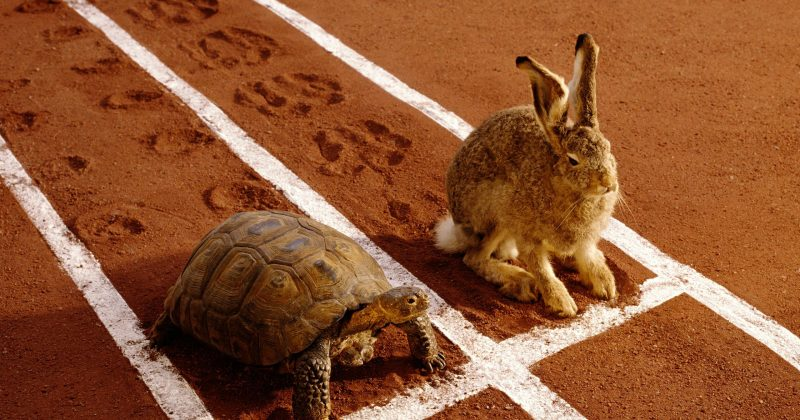 The Tortoise and the Hare in Innovation – Go Slow to Go Fast